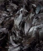 Deluxe Feather Boa - Black